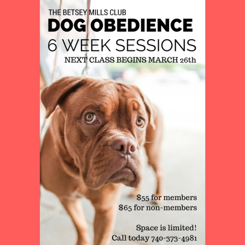 Dog Obedience (5)