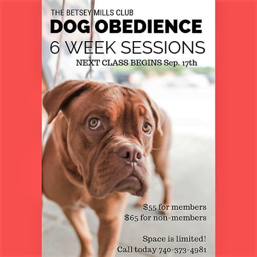 Dog Obedience (4)